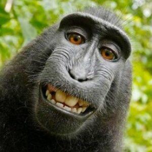 Profile photo of MonkieSystem